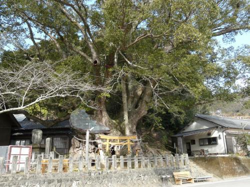 管内の巨木紹介―須崎市大谷の樟 | 高知県庁ホームページ