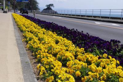 桂浜花海道 | 高知県庁ホームページ